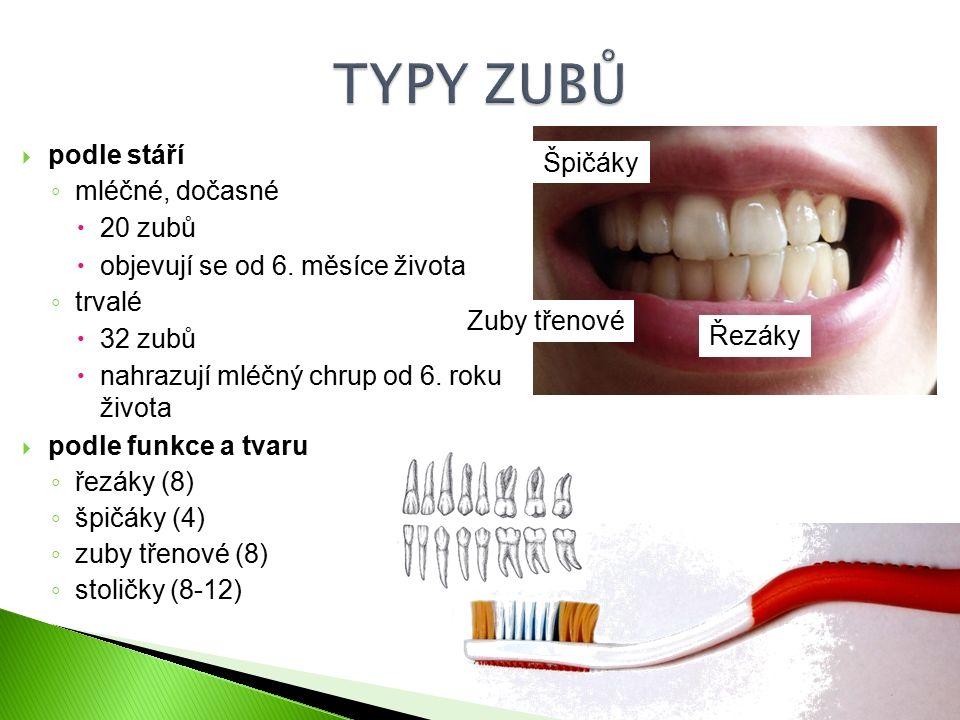 TYPY ZUBŮ podle stáří Špičáky mléčné, dočasné 20 zubů