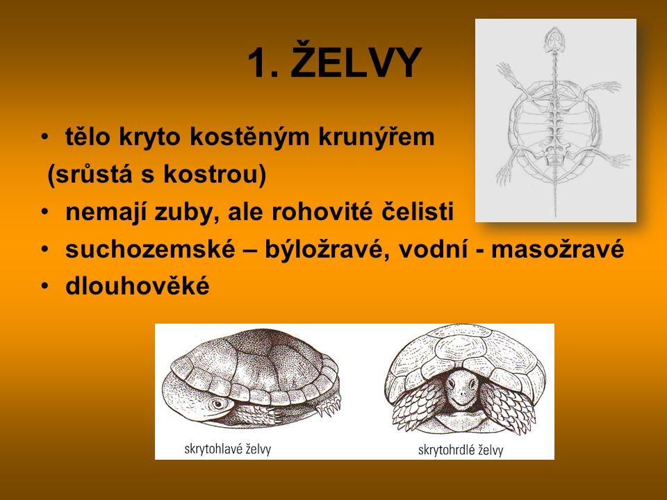1. ŽELVY tělo kryto kostěným krunýřem (srůstá s kostrou)