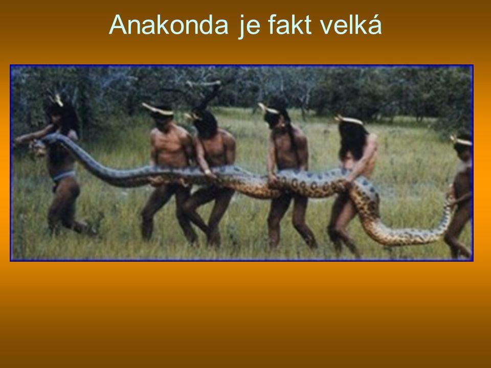 Anakonda je fakt velká