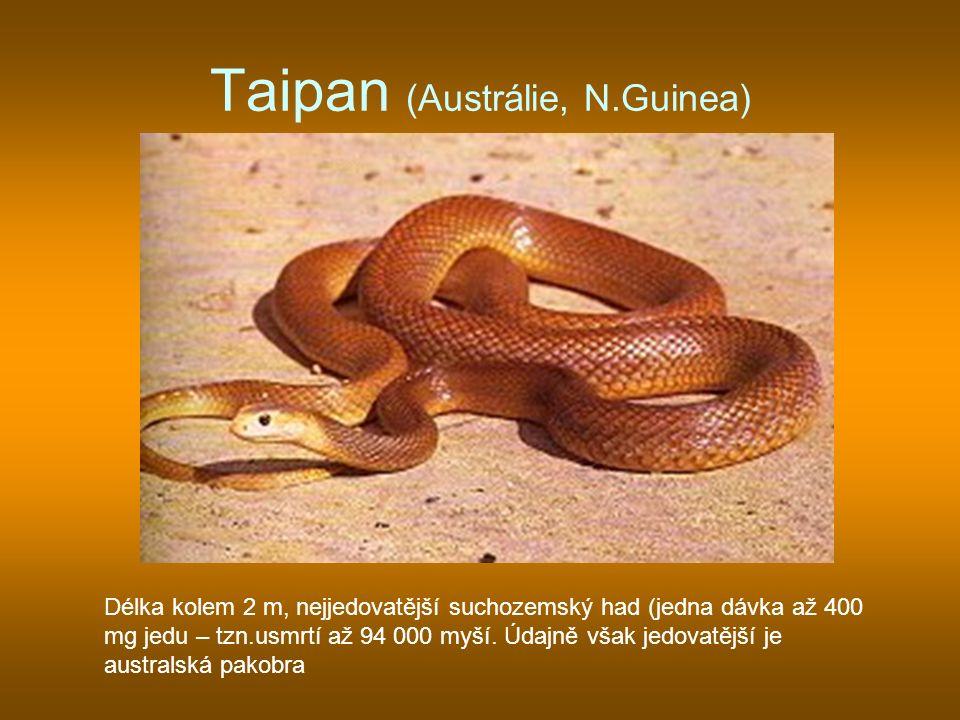 Taipan (Austrálie, N.Guinea)
