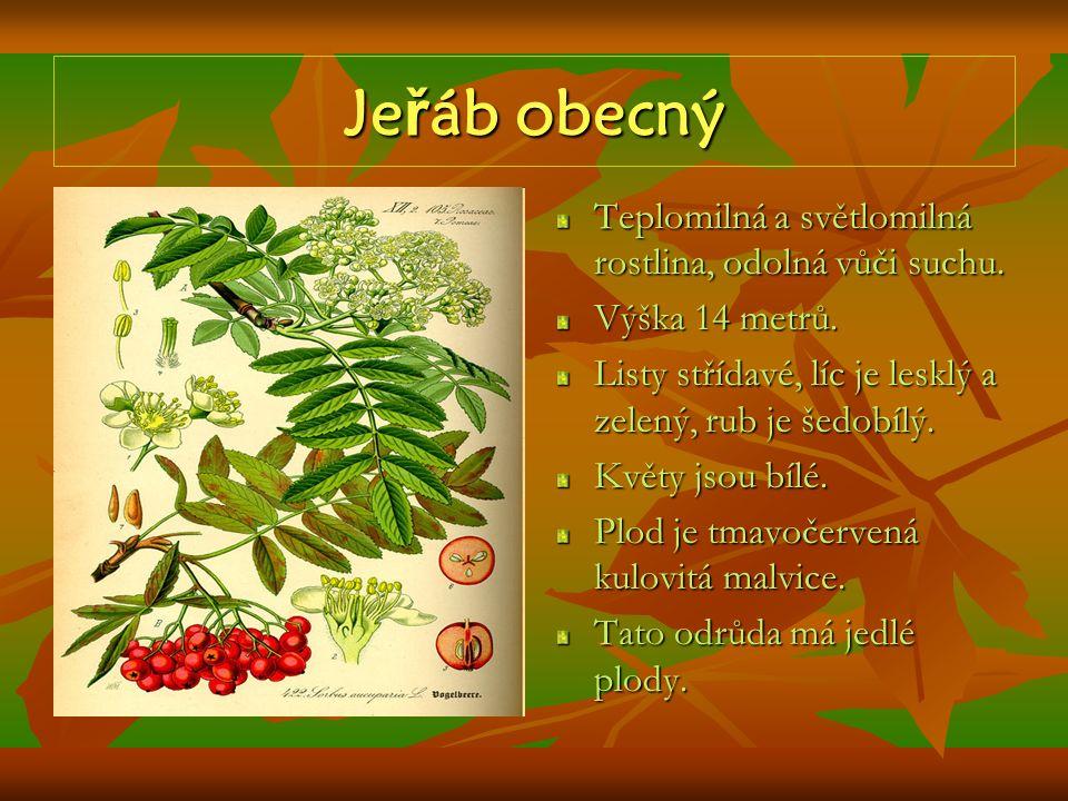 Jeřáb obecný Teplomilná a světlomilná rostlina, odolná vůči suchu.