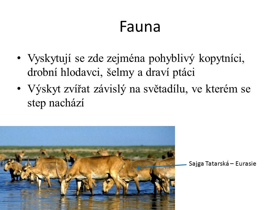 Fauna Vyskytují se zde zejména pohyblivý kopytníci, drobní hlodavci, šelmy a draví ptáci.