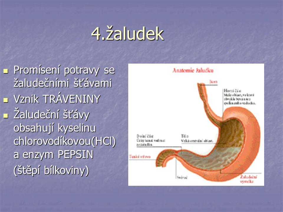 4.žaludek Promísení potravy se žaludečními šťávami Vznik TRÁVENINY
