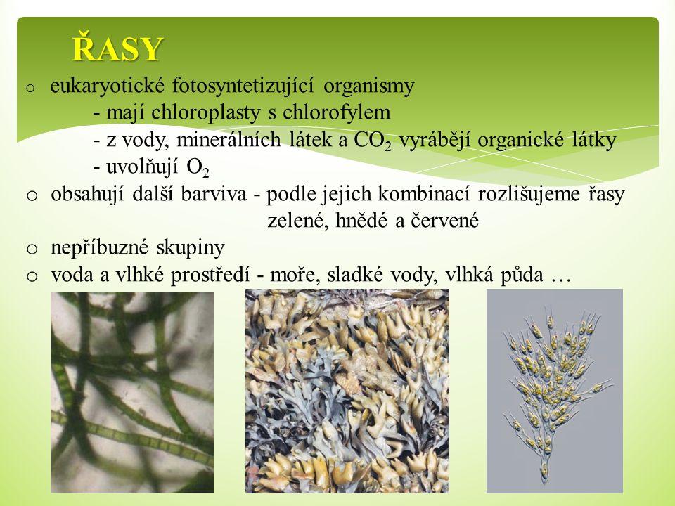 ŘASY - mají chloroplasty s chlorofylem
