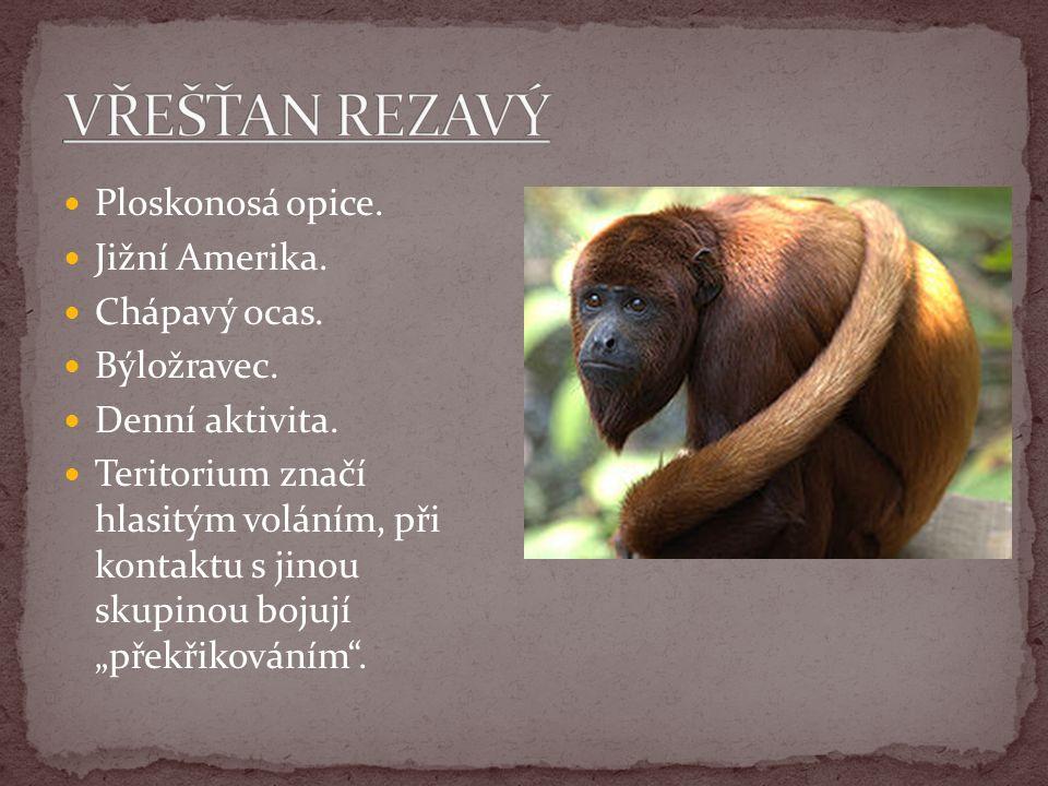VŘEŠŤAN REZAVÝ Ploskonosá opice. Jižní Amerika. Chápavý ocas.