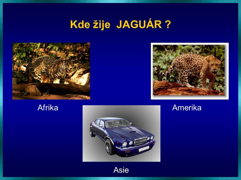 Kde žije JAGUÁR Afrika Amerika Asie