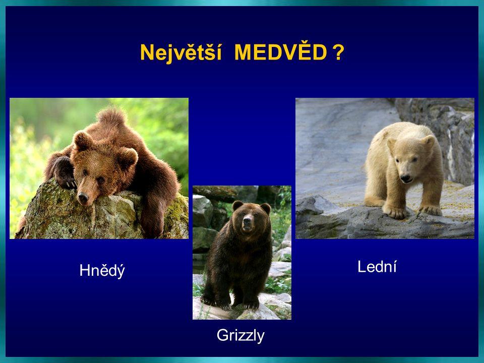 Největší MEDVĚD Lední Hnědý Grizzly