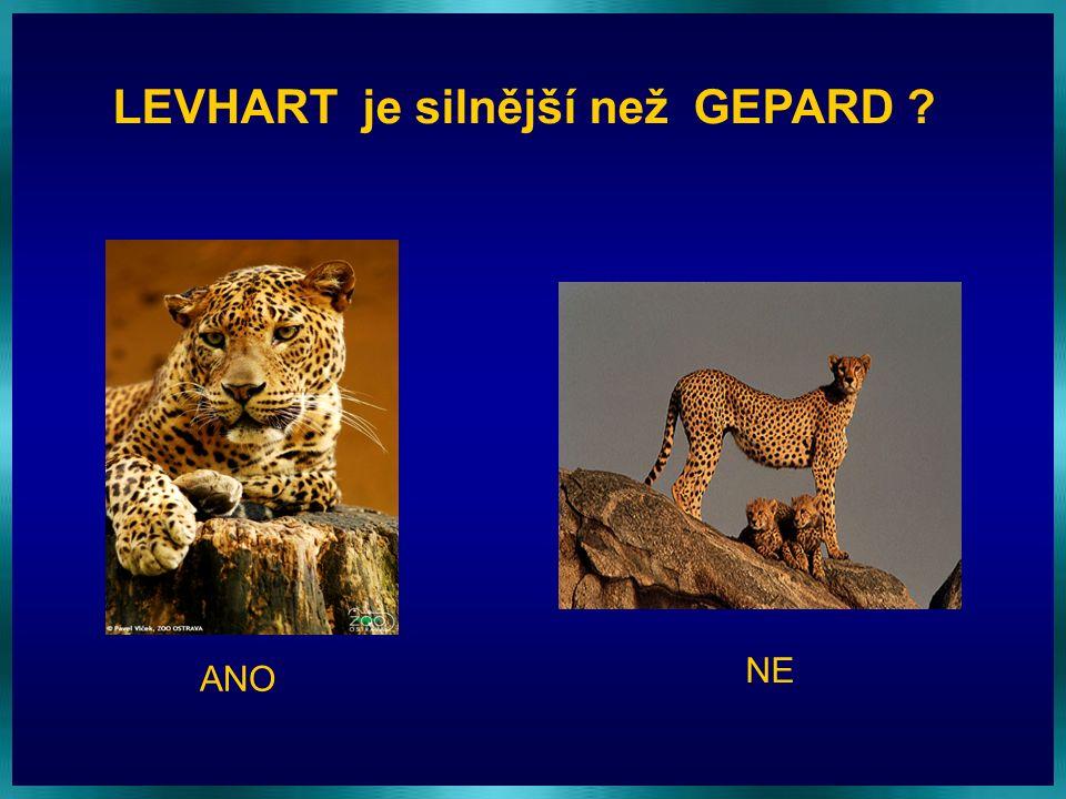 LEVHART je silnější než GEPARD