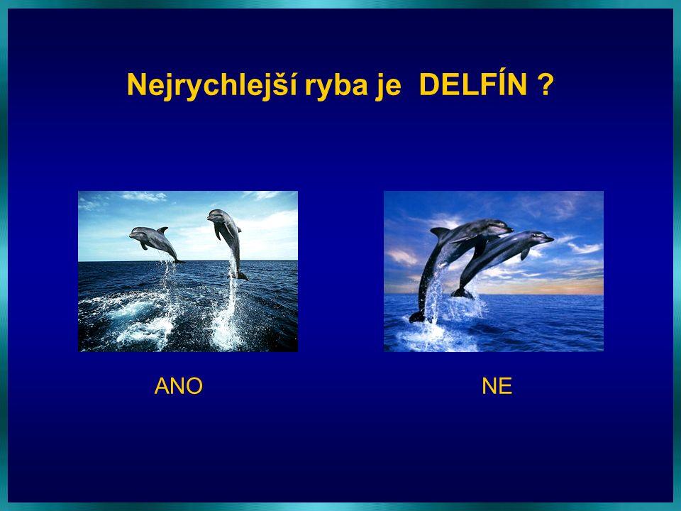 Nejrychlejší ryba je DELFÍN