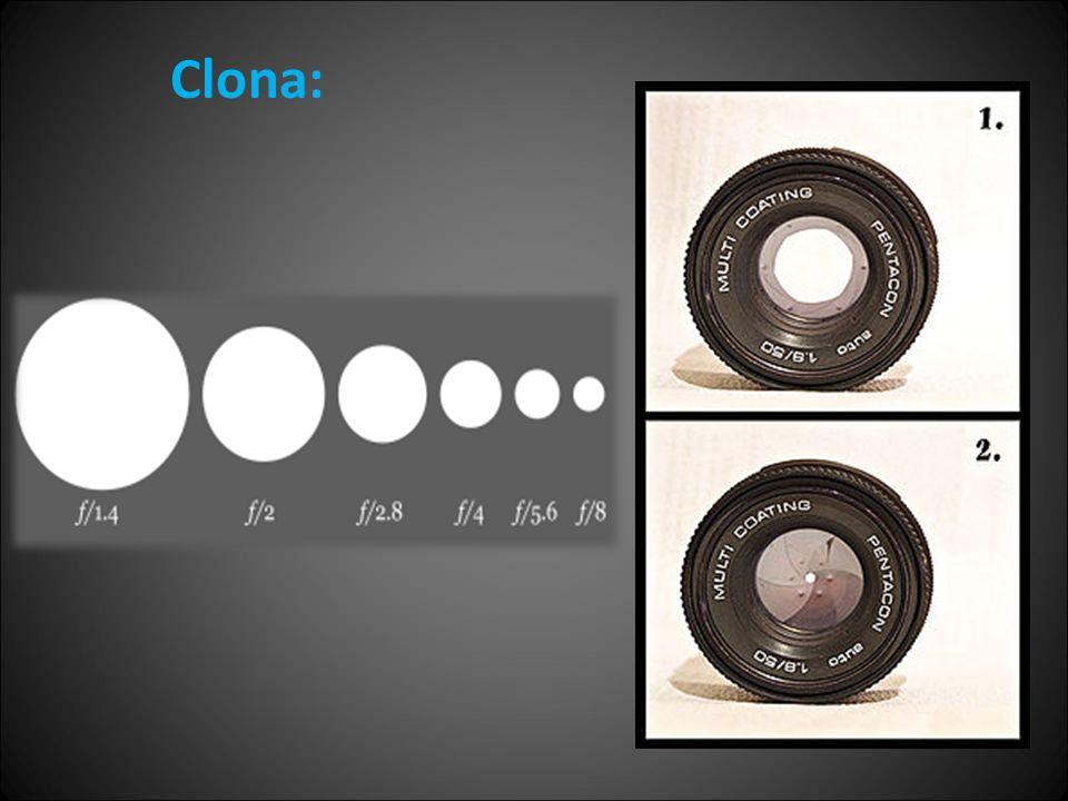 Clona: