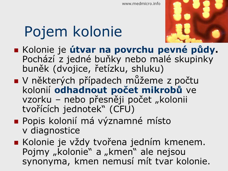 www.medmicro.info Pojem kolonie. Kolonie je útvar na povrchu pevné půdy. Pochází z jedné buňky nebo malé skupinky buněk (dvojice, řetízku, shluku)