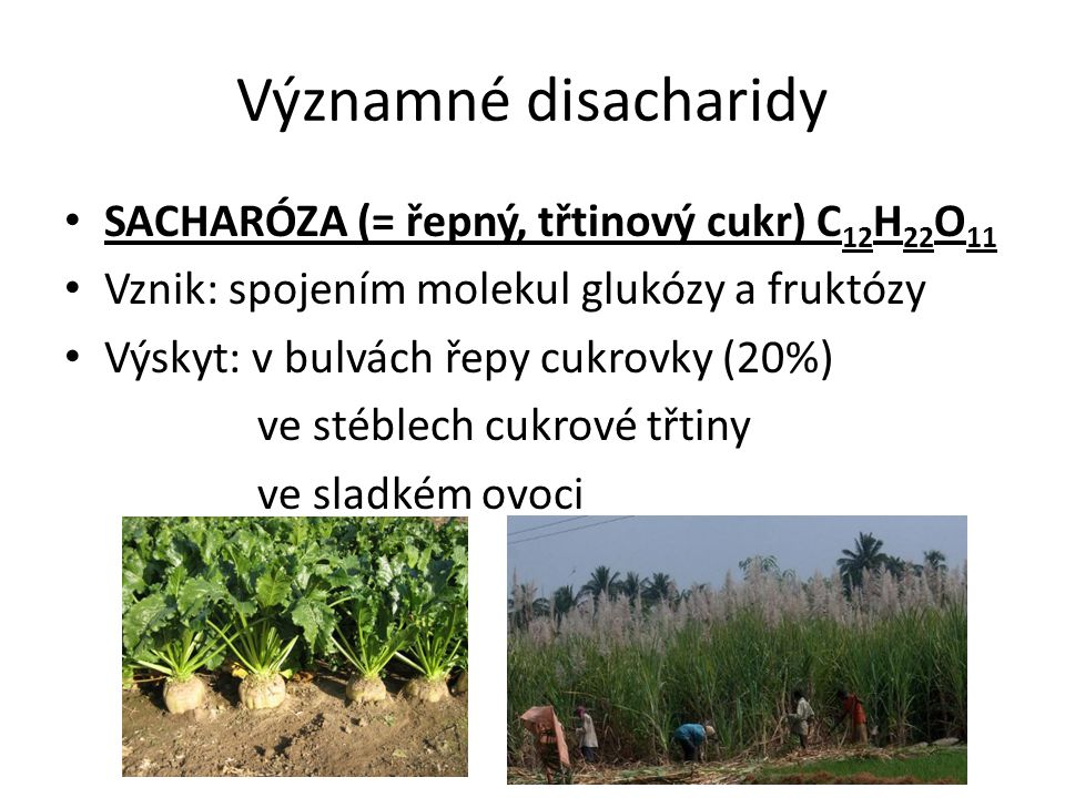 Významné disacharidy SACHARÓZA (= řepný, třtinový cukr) C12H22O11