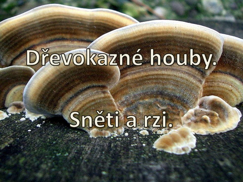 Dřevokazné houby. Sněti a rzi.