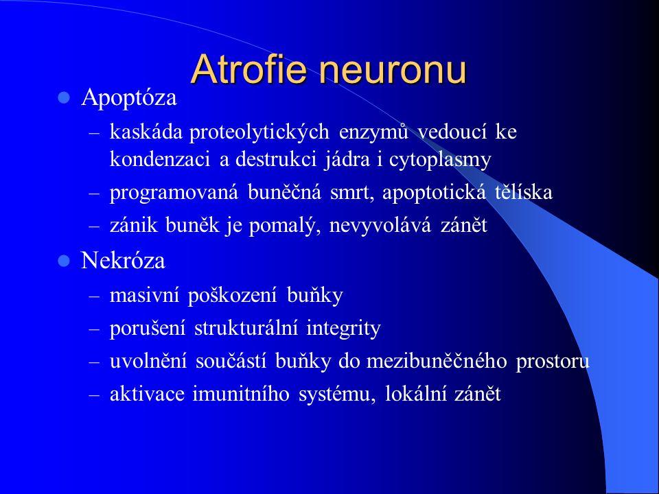 Atrofie neuronu Apoptóza Nekróza