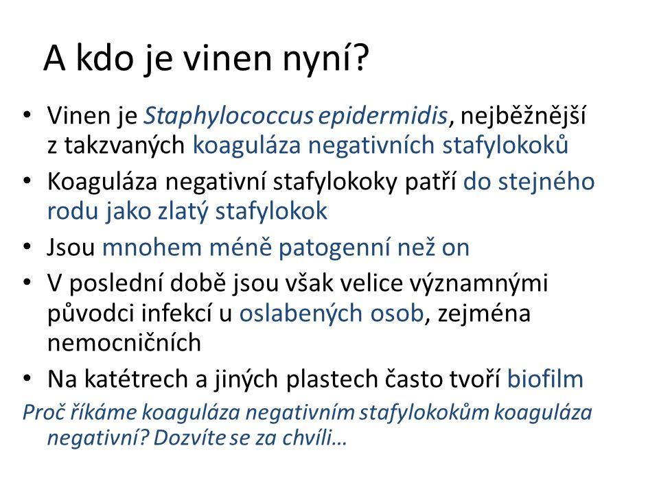 A kdo je vinen nyní Vinen je Staphylococcus epidermidis, nejběžnější z takzvaných koaguláza negativních stafylokoků.