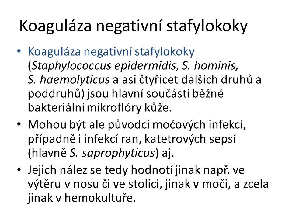 Koaguláza negativní stafylokoky