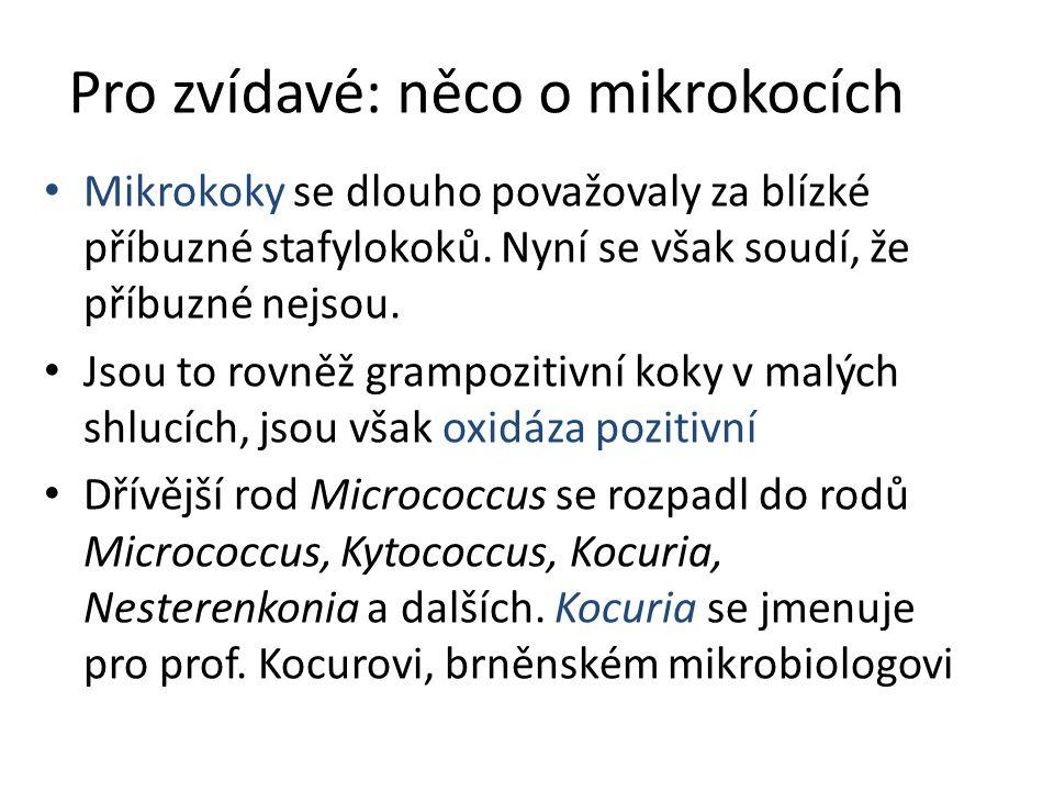 Pro zvídavé: něco o mikrokocích
