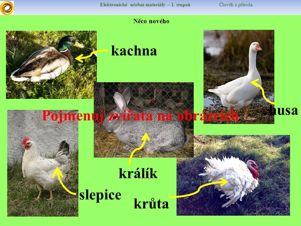 Pojmenuj zvířata na obrázcích