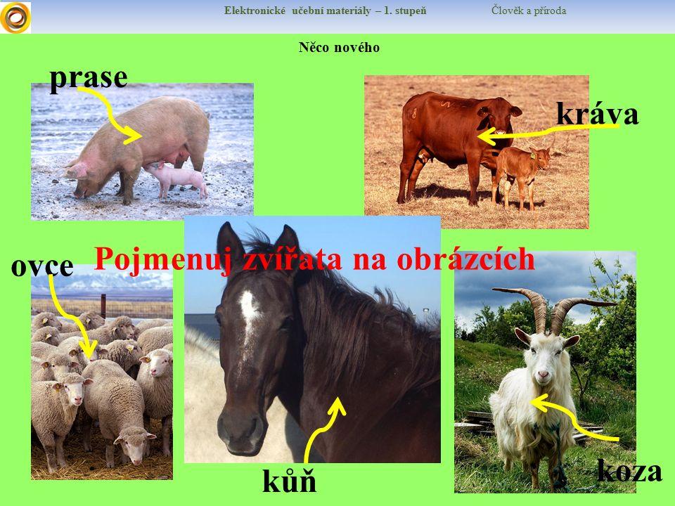 Pojmenuj zvířata na obrázcích ovce