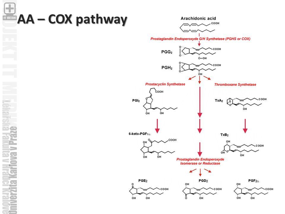 AA – COX pathway