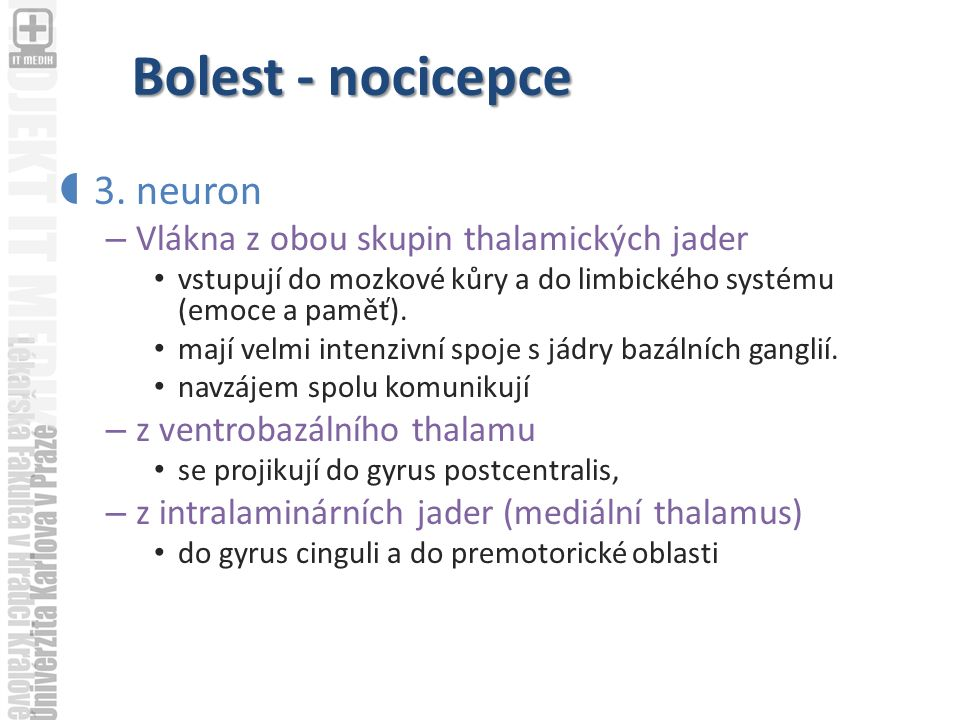 Bolest - nocicepce 3. neuron Vlákna z obou skupin thalamických jader
