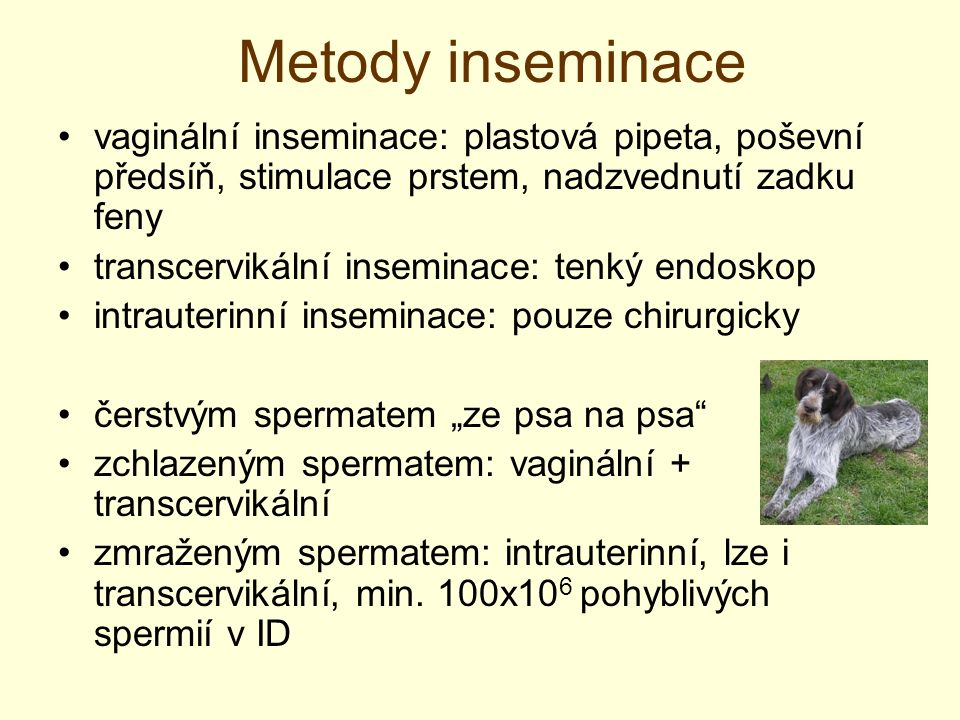 Metody inseminace vaginální inseminace: plastová pipeta, poševní předsíň, stimulace prstem, nadzvednutí zadku feny.