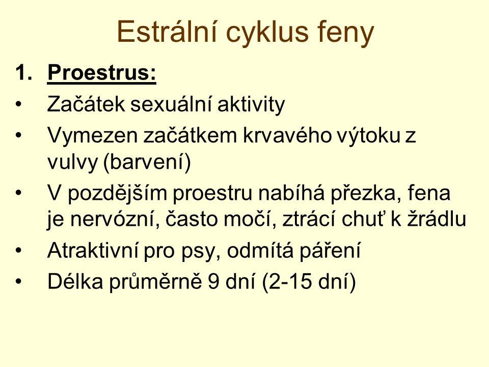 Estrální cyklus feny Proestrus: Začátek sexuální aktivity
