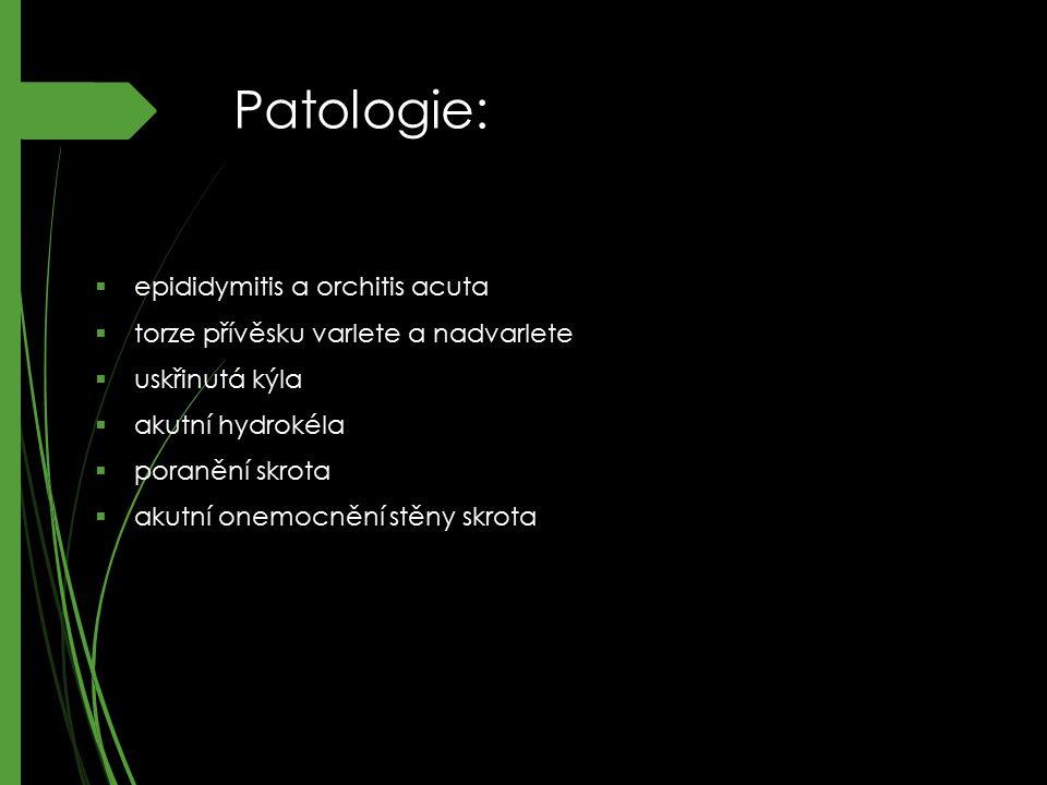 Patologie: epididymitis a orchitis acuta