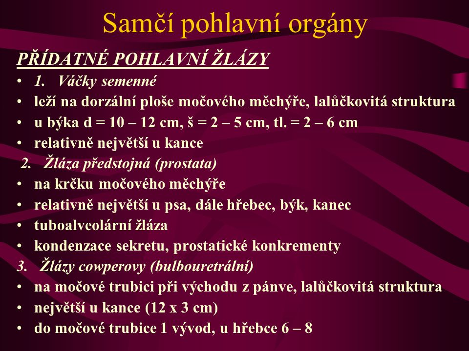 Samčí pohlavní orgány PŘÍDATNÉ POHLAVNÍ ŽLÁZY 1. Váčky semenné