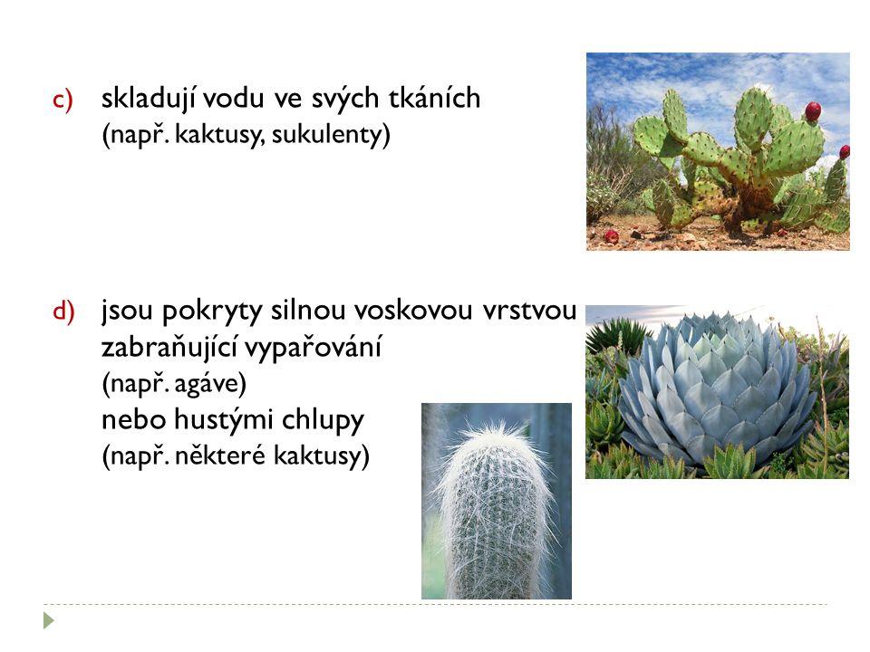 skladují vodu ve svých tkáních (např. kaktusy, sukulenty)