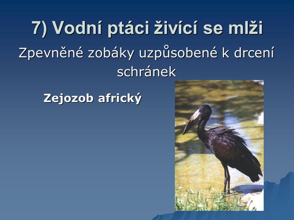 7) Vodní ptáci živící se mlži