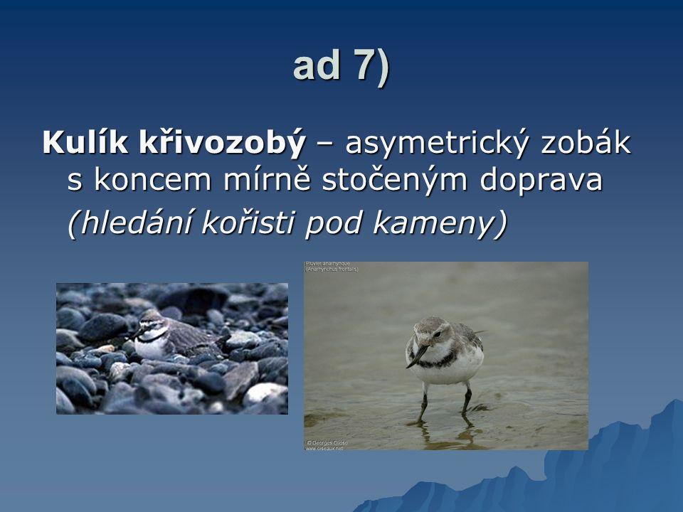 ad 7) Kulík křivozobý – asymetrický zobák s koncem mírně stočeným doprava.