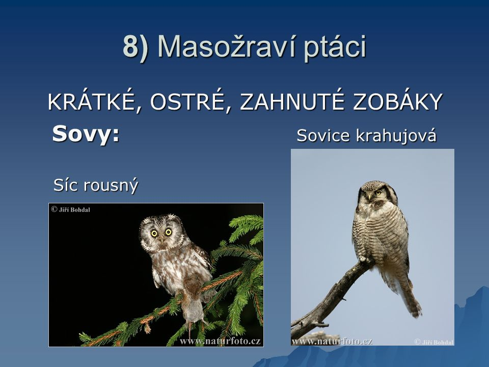 8) Masožraví ptáci KRÁTKÉ, OSTRÉ, ZAHNUTÉ ZOBÁKY