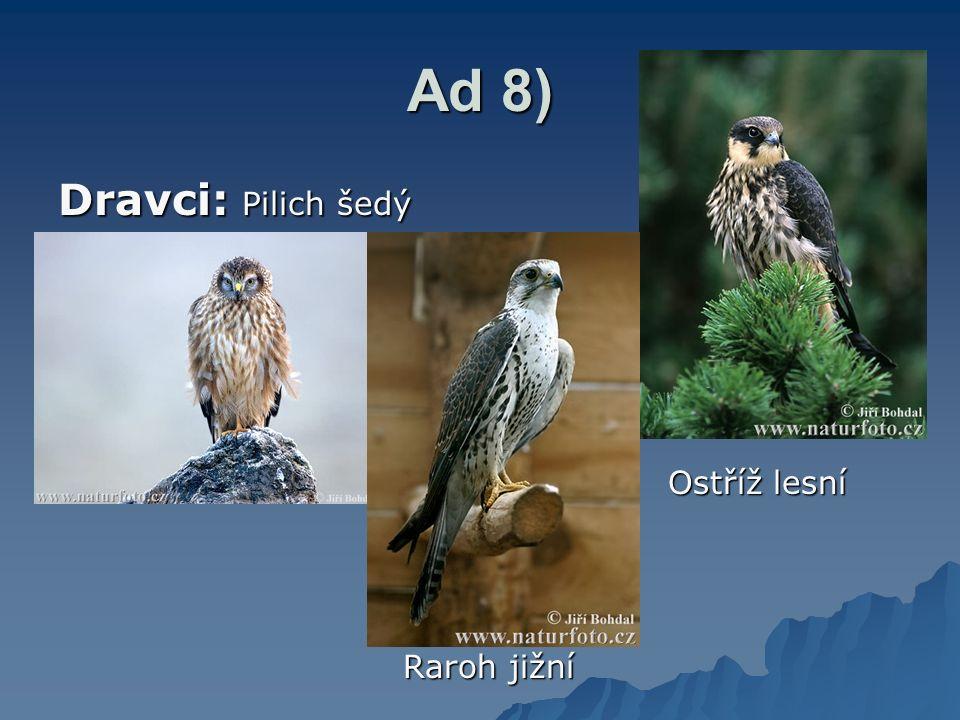 Ad 8) Dravci: Pilich šedý Ostříž lesní Raroh jižní