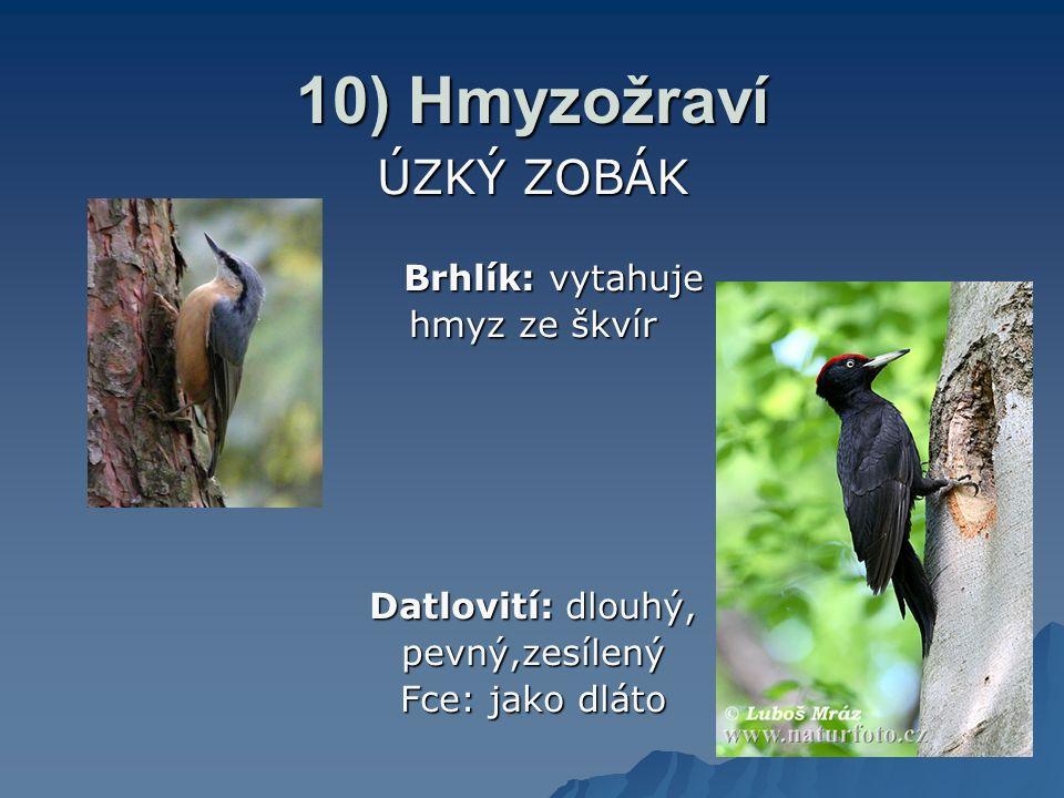 10) Hmyzožraví ÚZKÝ ZOBÁK Brhlík: vytahuje hmyz ze škvír