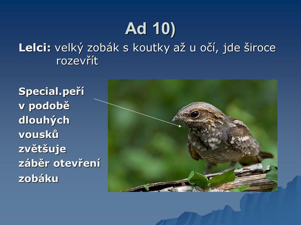 Ad 10) Lelci: velký zobák s koutky až u očí, jde široce rozevřít