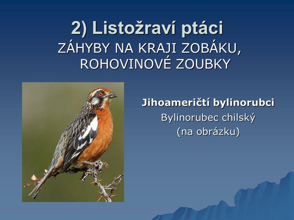 2) Listožraví ptáci ZÁHYBY NA KRAJI ZOBÁKU, ROHOVINOVÉ ZOUBKY
