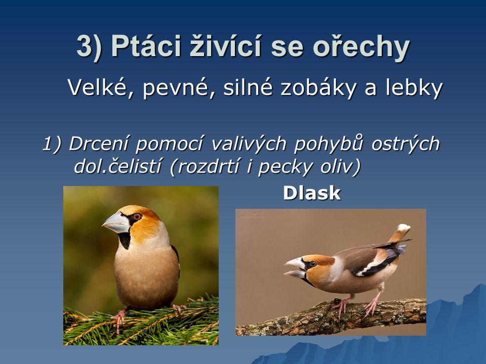 3) Ptáci živící se ořechy