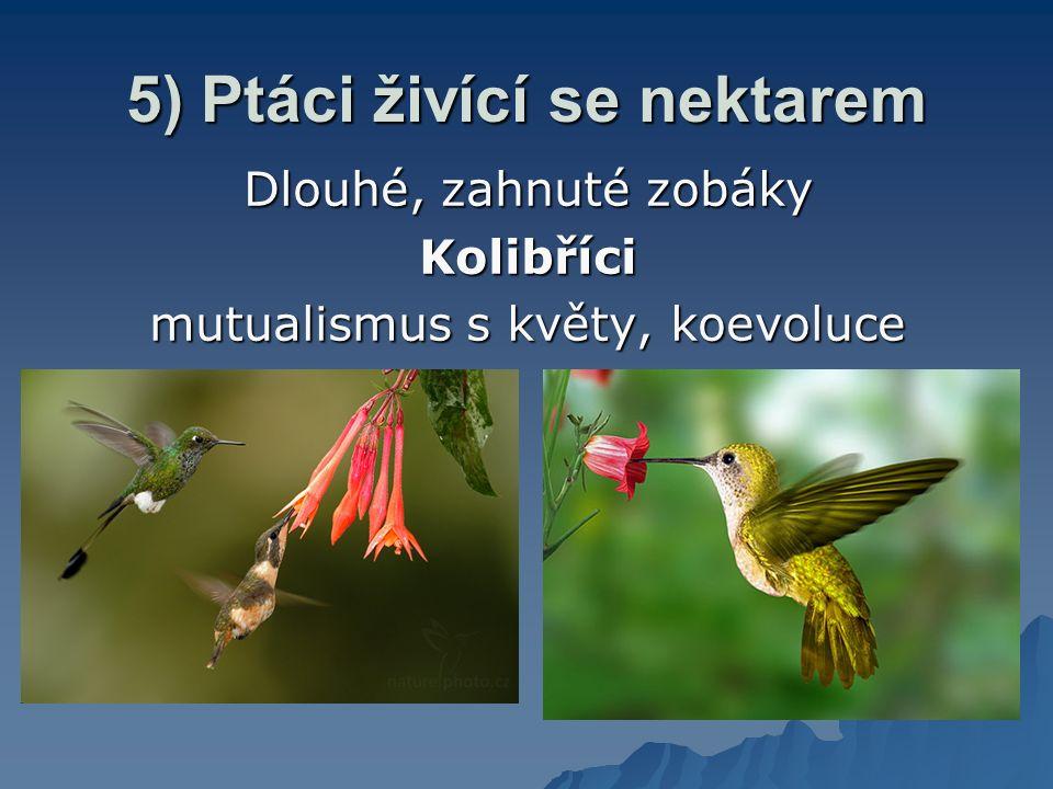 5) Ptáci živící se nektarem