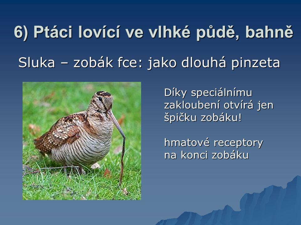 6) Ptáci lovící ve vlhké půdě, bahně