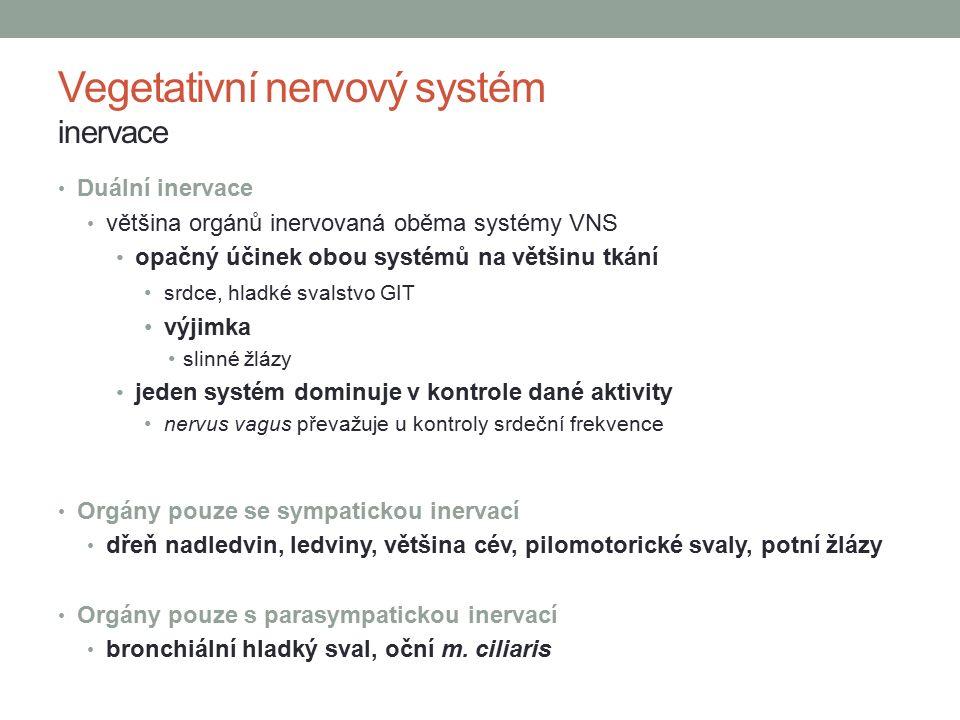 Vegetativní nervový systém inervace