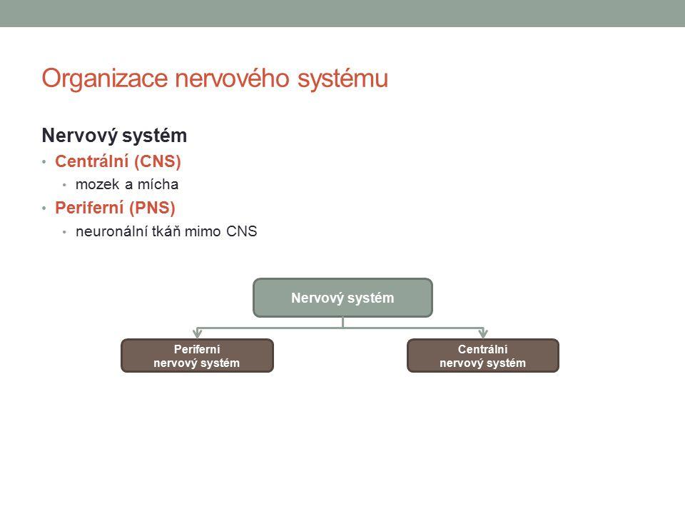 Organizace nervového systému