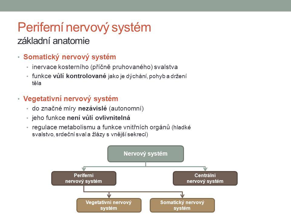 Periferní nervový systém základní anatomie