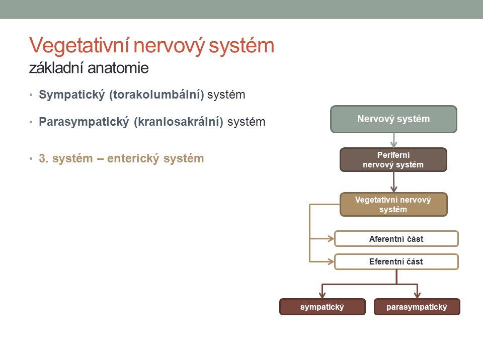 Vegetativní nervový systém základní anatomie