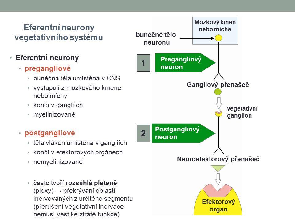 vegetativního systému Neuroefektorový přenašeč