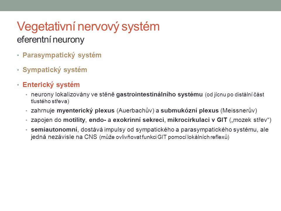 Vegetativní nervový systém eferentní neurony