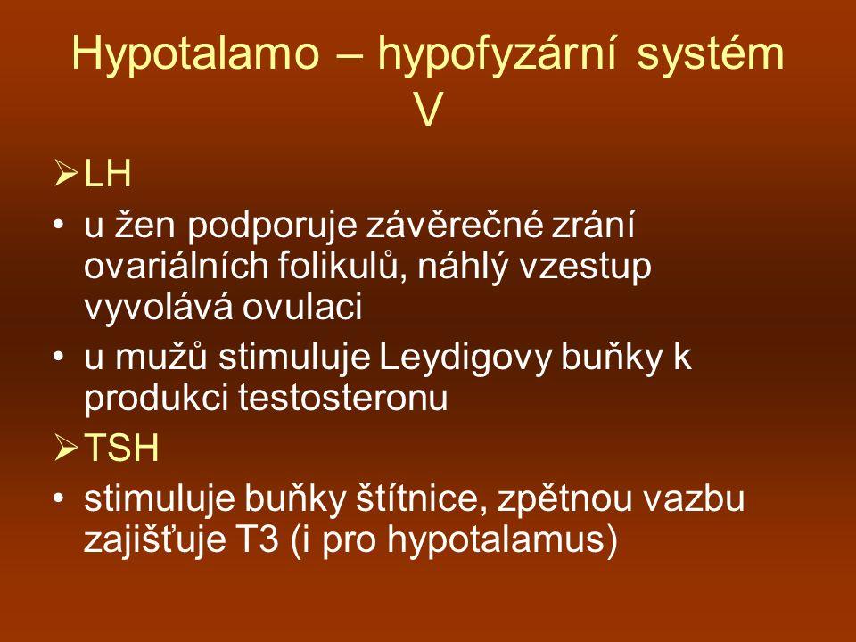 Hypotalamo – hypofyzární systém V