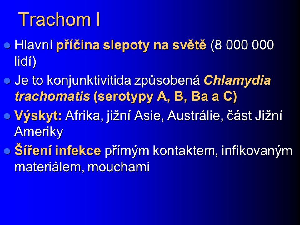 Trachom I Hlavní příčina slepoty na světě (8 000 000 lidí)
