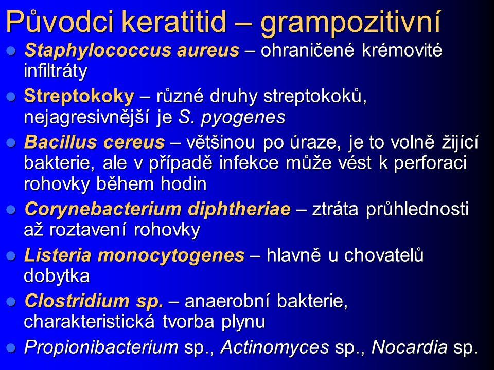 Původci keratitid – grampozitivní