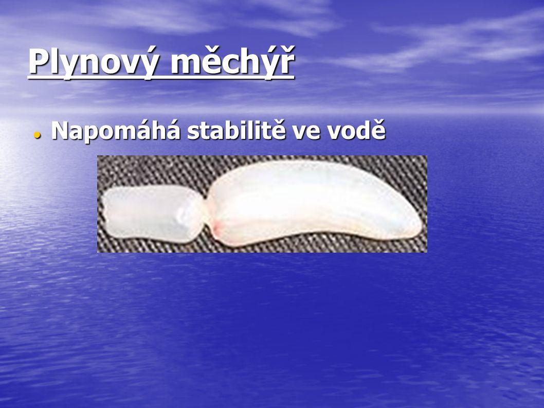 Plynový měchýř Napomáhá stabilitě ve vodě
